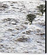 Snow On Moorland Canvas Print