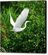 Snowy Egret Bird Canvas Print by Shahnewaz Karim