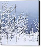 Snowy Trees Canvas Print by Elena Elisseeva