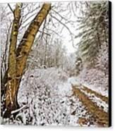 Snowy Watercolor Canvas Print by Debra and Dave Vanderlaan