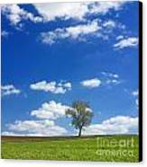 Solitary Tree In Green Meadow Canvas Print by Bernard Jaubert