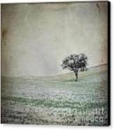 Solitary Tree In Winter. Auvergne. France. Europe Canvas Print