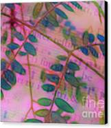 Song Of The Honey Locust Canvas Print by Judi Bagwell
