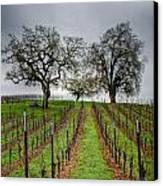 Sonoma County Vineyard Canvas Print