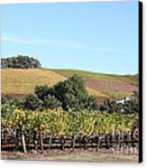 Sonoma Vineyards - Sonoma California - 5d19307 Canvas Print by Wingsdomain Art and Photography
