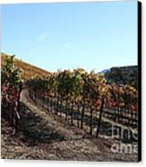 Sonoma Vineyards - Sonoma California - 5d19311 Canvas Print by Wingsdomain Art and Photography