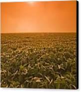 Soybean Field On A Misty Morning Canvas Print