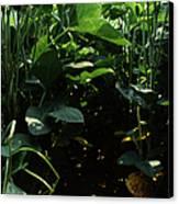 Soybean Leaves Canvas Print