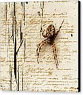 Spider Letter Canvas Print by Yvon van der Wijk