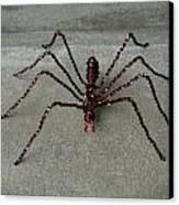 Spider Canvas Print by Scott Faucett
