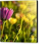 Spring Flower Canvas Print by Carlos Caetano