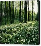 Spring Forest View With Anemones, Rugen Canvas Print by Sisse Brimberg