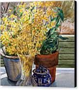 Spring Forthysia Canvas Print by Peter Sit
