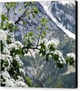 Spring In Alps Canvas Print by Sola Deo Gloria