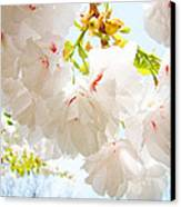 Spring White Pink Tree Flower Blossoms Canvas Print