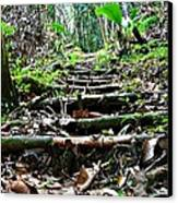 Stairs In The Forest Canvas Print by Jenny Senra Pampin