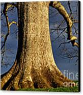 Standing Strong Oak Tree And Storm Clouds Canvas Print by Thomas R Fletcher