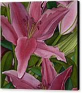 Star Gazer Lilies Canvas Print by Vikki Wicks