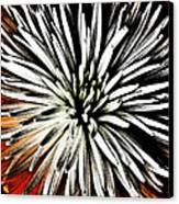 Starburst Canvas Print by Yvonne Scott