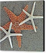 Starfish Three Canvas Print by Sandi OReilly
