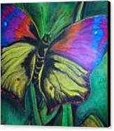 Still Butterfly Canvas Print