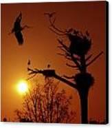 Storks Canvas Print by Carlos Caetano
