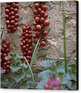Strings Of Tomatoes Dry On A Wall Canvas Print by Tino Soriano