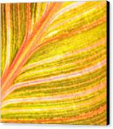 Striped Leaf Canvas Print by Bonnie Bruno