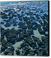 Stromatolites Canvas Print by Dirk Wiersma