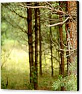 Summer Forest. Pine Trees Canvas Print by Jenny Rainbow