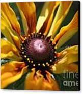 Sun On Flower Canvas Print by David Taylor