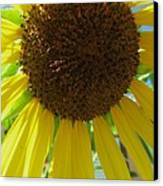 Sunflower-two Canvas Print