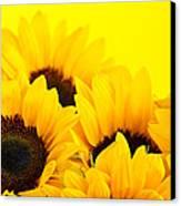 Sunflowers Canvas Print by Elena Elisseeva