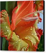 Sunny Glads Canvas Print by Susan Herber