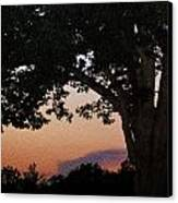 Sunset Over A Witness Tree Canvas Print