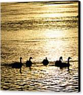 Sunset Over Canada Geese Canvas Print by Joseph Rossi