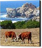 Surf And Turf Two Canvas Print by Jeff Lowe
