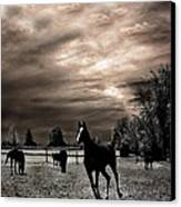 Surreal Horses Infrared Nature  Canvas Print by Kathy Fornal