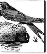 Swallow, C1800 Canvas Print