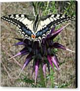 Swallowtail Canvas Print by Eric Kempson
