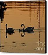 Swan Family At Sunset Canvas Print by Camilla Brattemark