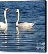 Swan Mates Canvas Print by Sabrina L Ryan