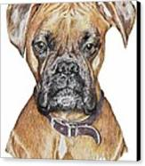 Sweet Boxer Canvas Print by Marla Saville