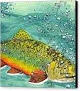 Swimming Upstream Canvas Print by Sheryl Brandes