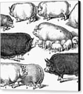 Swine, 1876 Canvas Print by Granger
