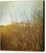 Tall Grass Growing In Late Autumn Canvas Print by Sandra Cunningham