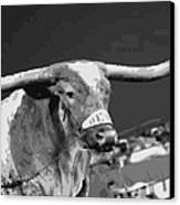 Texas Bevo Bw15 Canvas Print