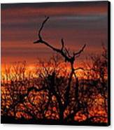 Texas Spanish Oak Tree  Sunset Canvas Print by Rebecca Cearley