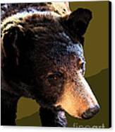 The Black Bear Canvas Print