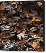 The Browns Of Fall Canvas Print